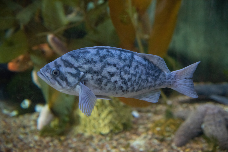 رؤية السمك الحي في المنام للعزباء