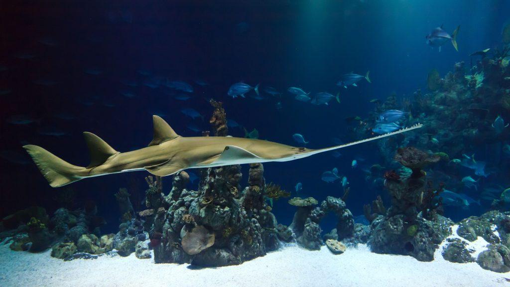 تفسير حلم السمك الحي في لابن سيرين